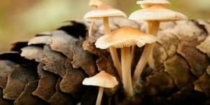 野生蘑菇中毒有哪些表现