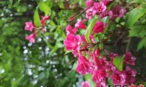 花之韵,叶之语